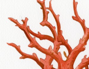 red_coral_trilobite_detail_2_web