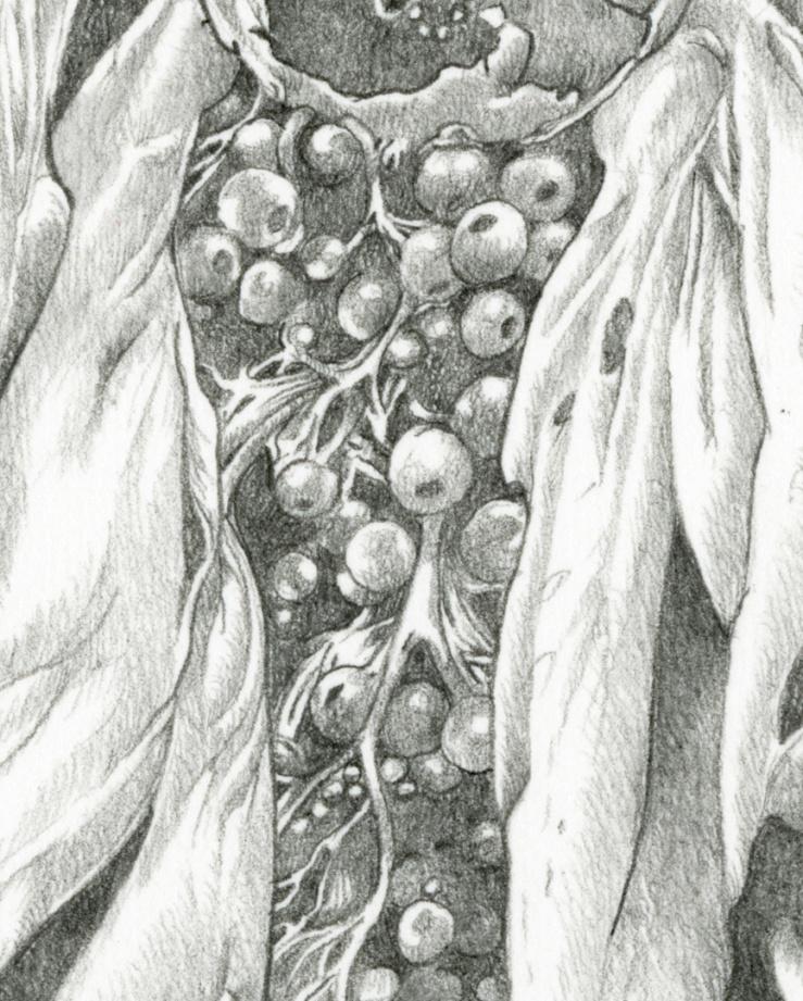 Petal_detail_1