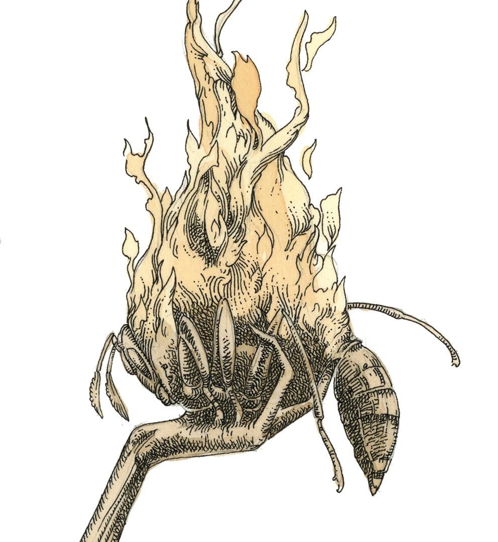 Firebug_final_web_detail_3